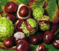 Cheval Chestnut